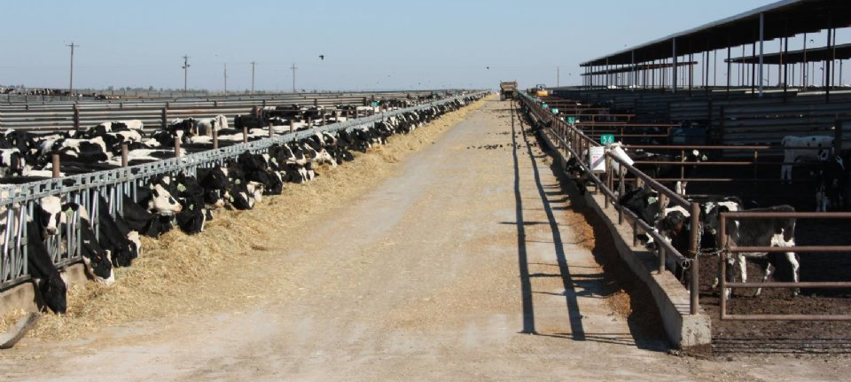 American milk producers compensated for the corona loss
