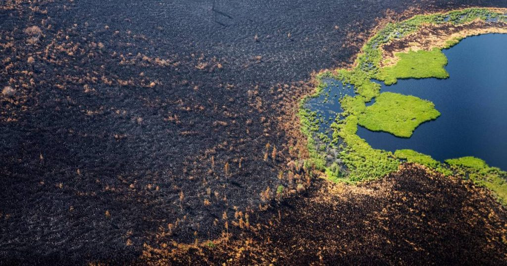 Russia is still battling 177 forest fires |  Abroad