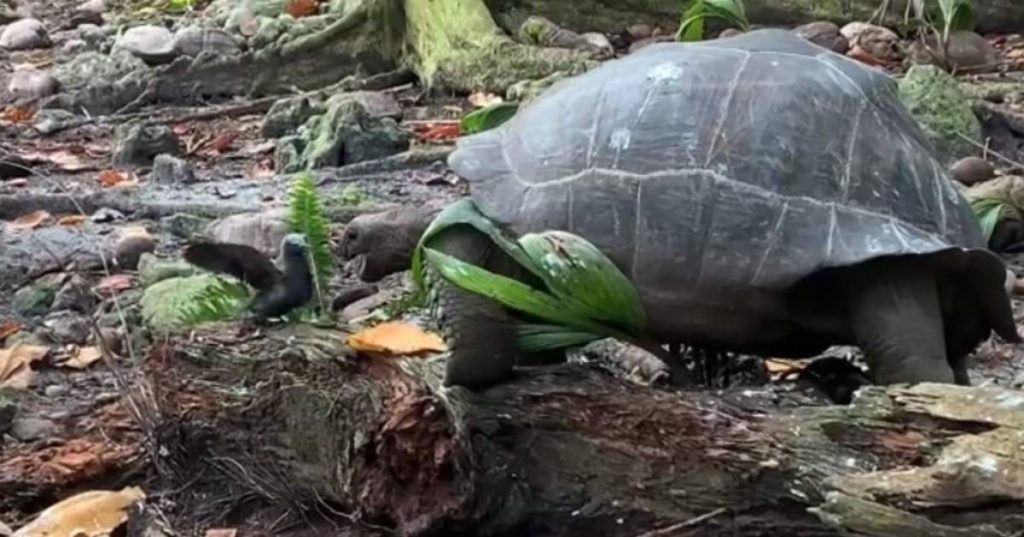 Surprising and terrifying: giant turtles eat young birds |  the animals
