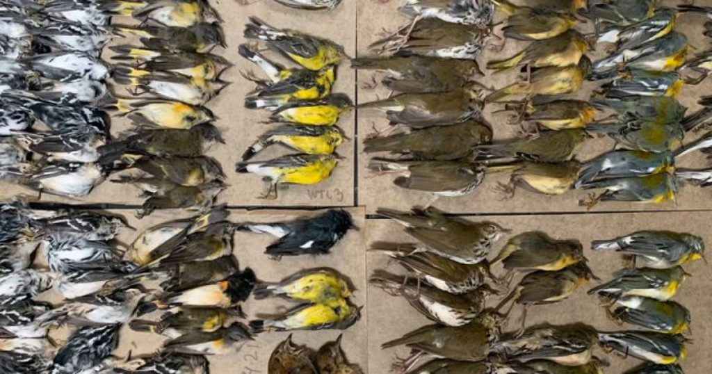 Hundreds of migratory birds died after crashing into skyscrapers in New York |  Abroad