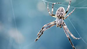 A microcosm of why so many people fear spiders (and how to get rid of that fear)