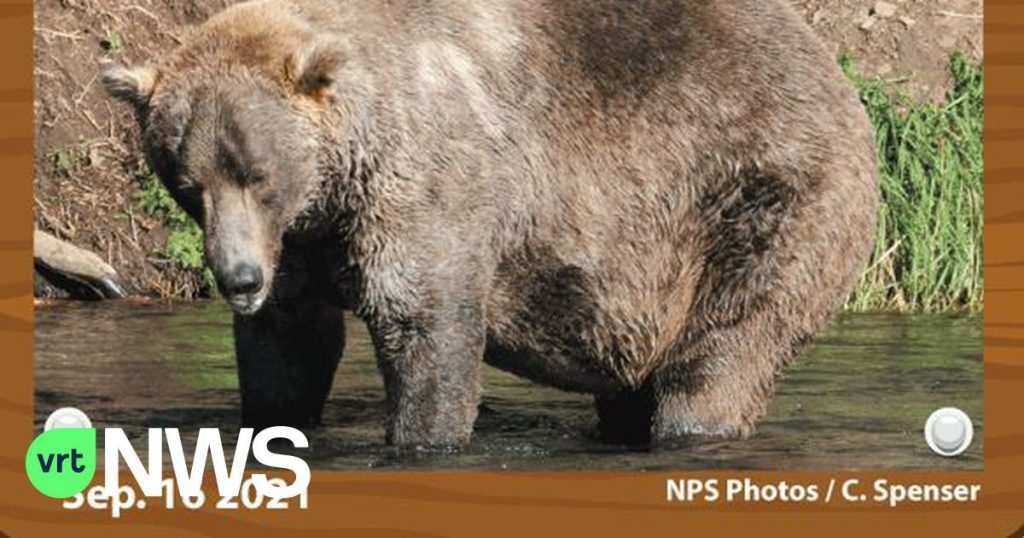 Alaska's Fat Bear Week: And the winner is... Otis!  Or how to make patience a virtue